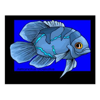 Cartão Postal Peixes tropicais azuis bonitos de Oscar