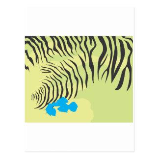 Cartão Postal Pele do papagaio do Budgerigar