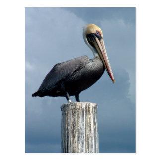 Cartão Postal Pelicano em uma pilha 1.