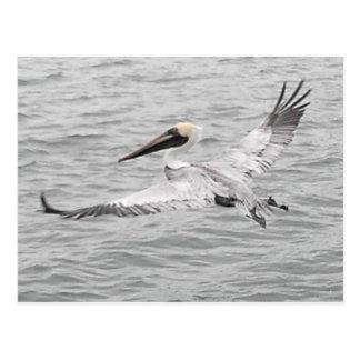Cartão Postal Pelicano em vôo