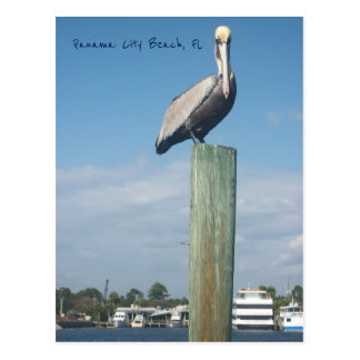 Cartão Postal Pelicano na praia da Cidade do Panamá, FL
