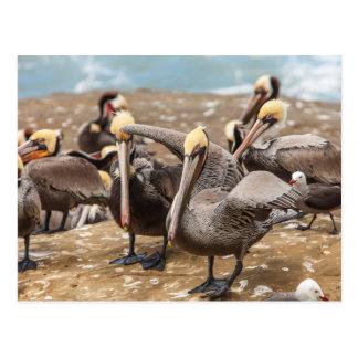 Cartão Postal Pelicanos de Brown em terra. Angra de La Jolla,