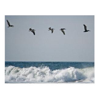 Cartão Postal Pelicanos de Oregon