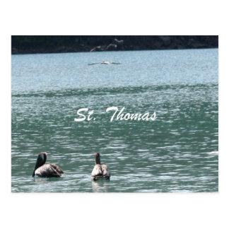 Cartão Postal Pelicanos em St Thomas