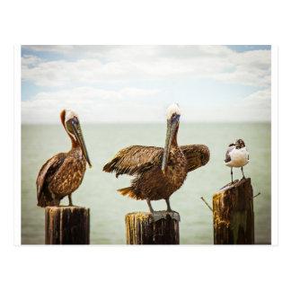 Cartão Postal Pelicanos empoleirados em cargos