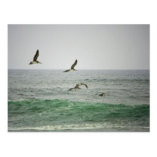 Cartão Postal Pelicanos na praia de Horsfall, Oregon