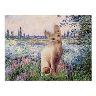 Cartão Postal Pelo Seine - gato de creme de Sphynx