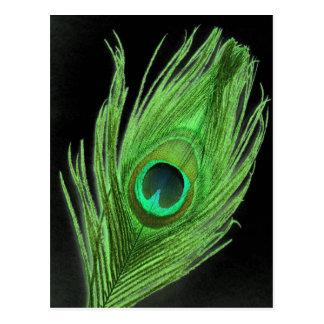 Cartão Postal Pena verde do pavão no preto