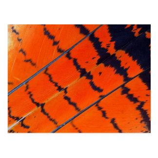 Cartão Postal Penas alaranjadas e pretas do Cockatoo