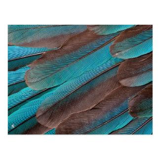 Cartão Postal Penas da asa do martinho pescatore