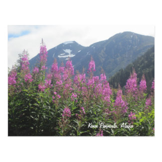 Cartão Postal Península de Kenai, Alaska
