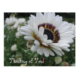 Cartão Postal Pensamento animador de você