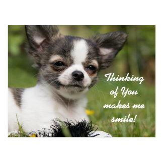 Cartão Postal Pensamento de você chihuahua