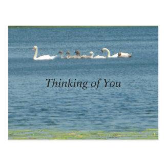 Cartão Postal Pensamento de você família das cisnes