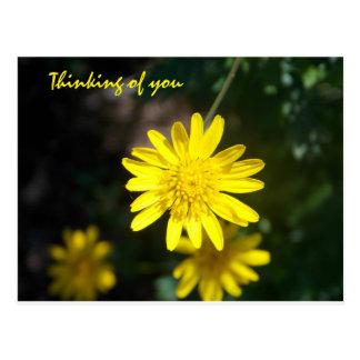 Cartão Postal Pensamento de você - margarida amarela