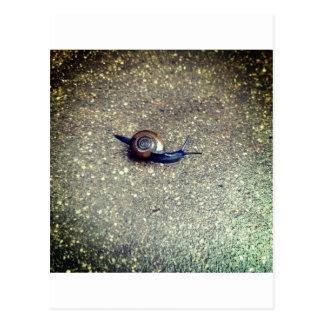 Cartão Postal Pequeno caracol
