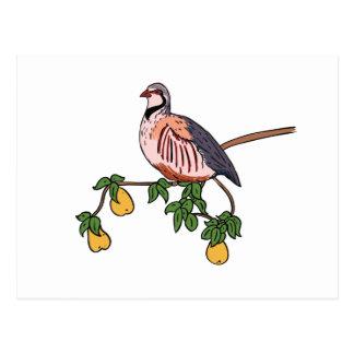 Cartão Postal Perdiz em uma árvore de pera