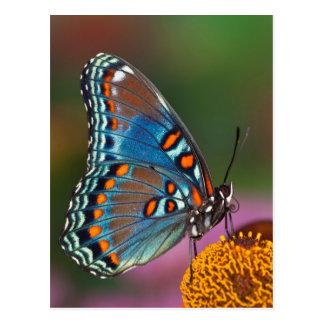 Cartão Postal Perfil da borboleta em uma flor