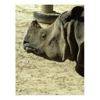 Cartão Postal Perfil do rinoceronte