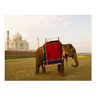 Cartão Postal Perfil lateral de um elefante, Taj Mahal, India