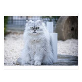 Cartão Postal persa da chinchila