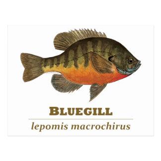 Cartão Postal Pesca da brema do Bluegill