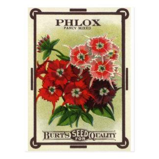 Cartão Postal phlox misturado