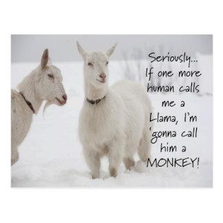 Cartão Postal Piada animal engraçada bonito da cabra