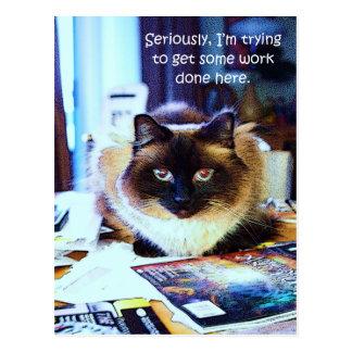 Cartão Postal Piada animal engraçada bonito do gato do gatinho