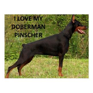 Cartão Postal PIC de w do amor do pinscher do doberman