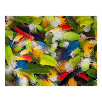 Cartão Postal Pilha de penas coloridas