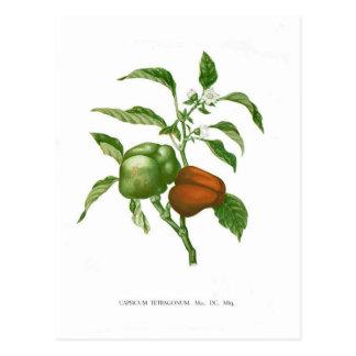 Cartão Postal Pimenta