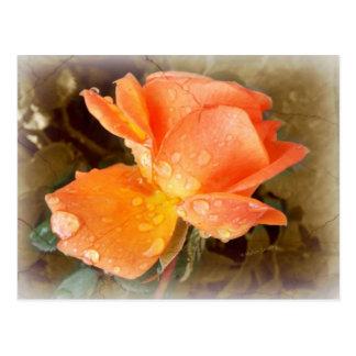 Cartão Postal Pingos de chuva em rosas .....