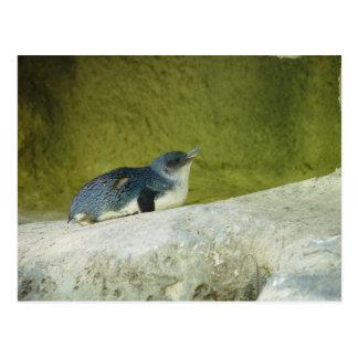 Cartão Postal Pinguim bonito do bebê no jardim zoológico de