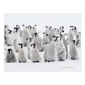 Cartão Postal Pinguim de imperador