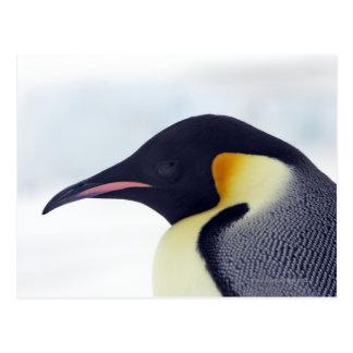 Cartão Postal Pinguim de imperador, ilha do monte da neve, mar