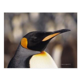 Cartão Postal Pinguim de rei (patagonicus do Aptenodytes)