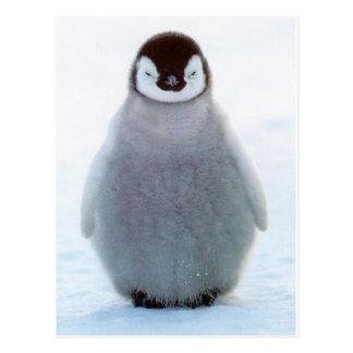 Cartão Postal Pinguim do bebê