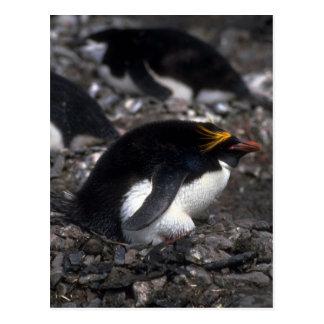 Cartão Postal Pinguim do macarrão que senta-se no ovo