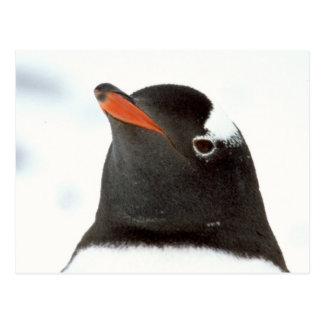 Cartão Postal Pinguim-tastic