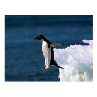 Cartão Postal Pinguins de Adelie que pulam de um iceberg