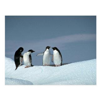 Cartão Postal Pinguins de Adelite, a Antártica