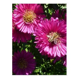 Cartão Postal Pink áster - Postcard