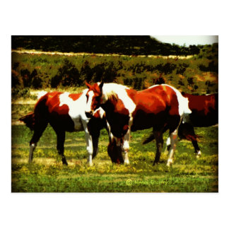 Cartão Postal Pinte cavalos