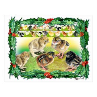 Cartão Postal Pintinhos do Natal