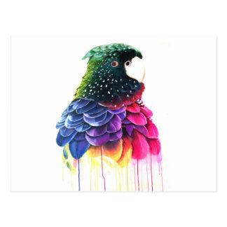 Cartão Postal Pintura a óleo do abstrato do pássaro do papagaio