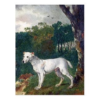 Cartão Postal Pintura de bull terrier - belas artes do vintage