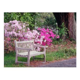 Cartão Postal Pique as flores do banco do jardim