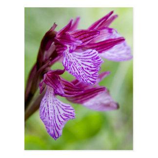 Cartão Postal Piscina, Crete. Orquídea de borboleta na flor