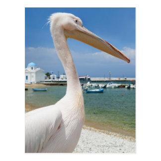 Cartão Postal Piscina, ilhas de Cyclades, Mykonos, pelicano